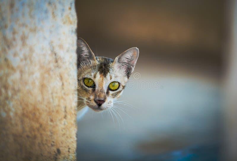 La mirada del gato en mí es muy asustadiza pero me gusta el ojo del verde foto de archivo