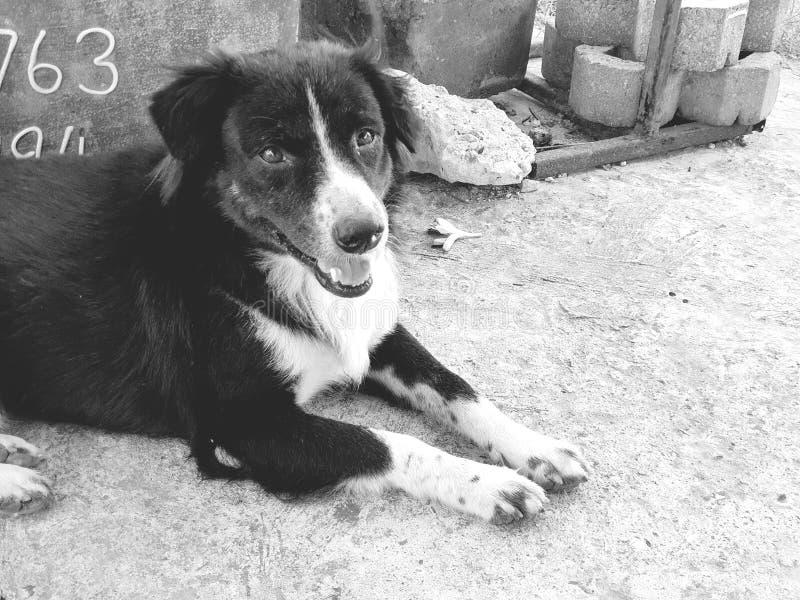 La mirada del perro de la calle en mí imagen de archivo libre de regalías