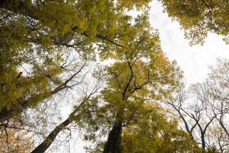 La mirada en los árboles en la caída fotos de archivo
