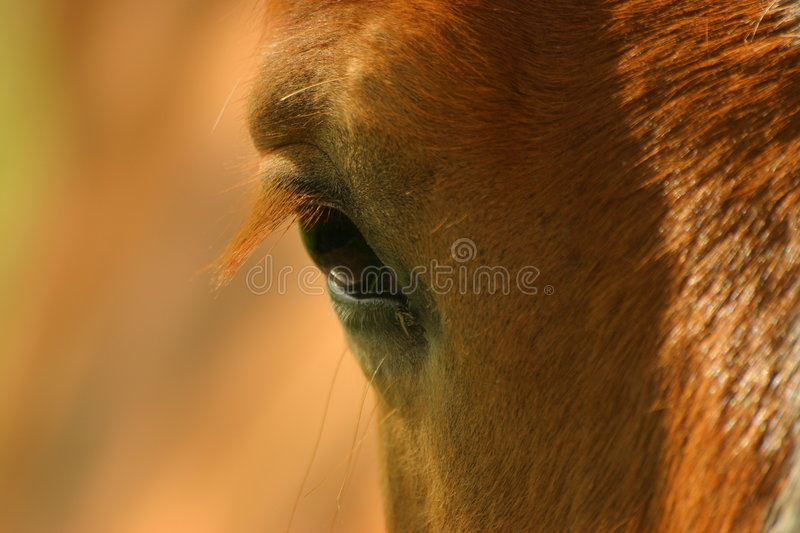 Download La mirada/The look stock photo. Image of pelos, kind, horse - 7995498