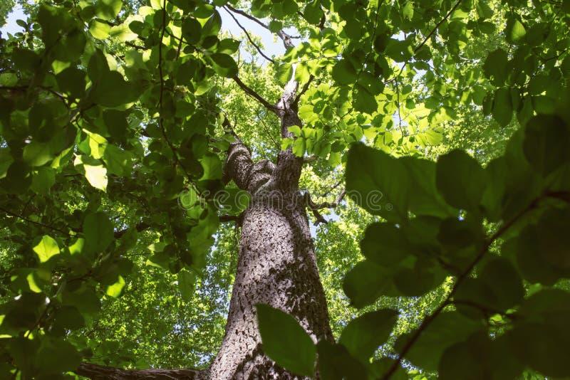 La mirada para arriba con el verde rico se va en un bosque foto de archivo