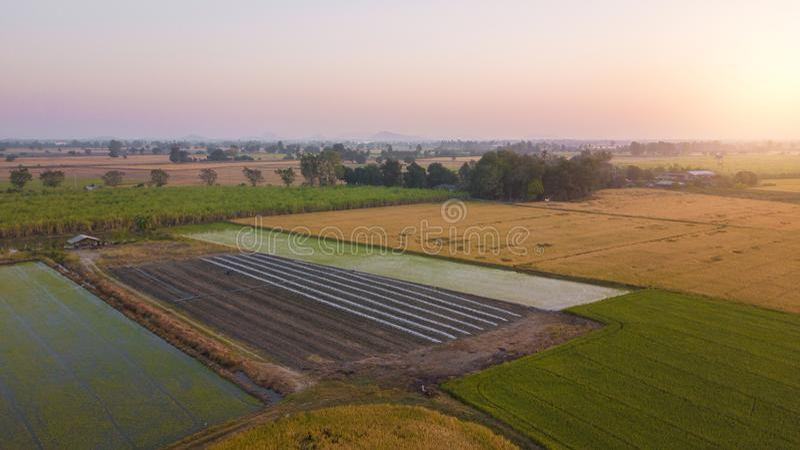 La mise en valeur de sol de champ en vue de l'ensemencement ou du plantin image libre de droits