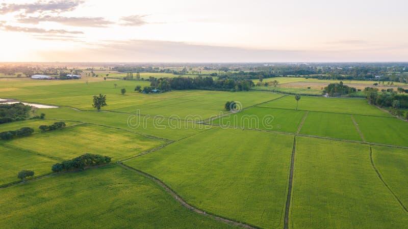 La mise en valeur de sol de champ en vue de l'ensemencement ou du plantin photo libre de droits