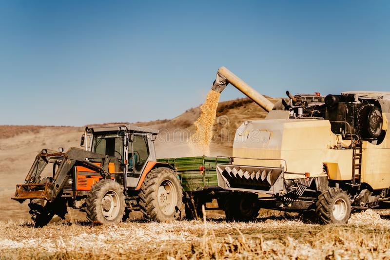 La moissonneuse de cartel fonctionne dans des domaines de maïs, déchargeant le maïs dans la remorque de tracteur photographie stock