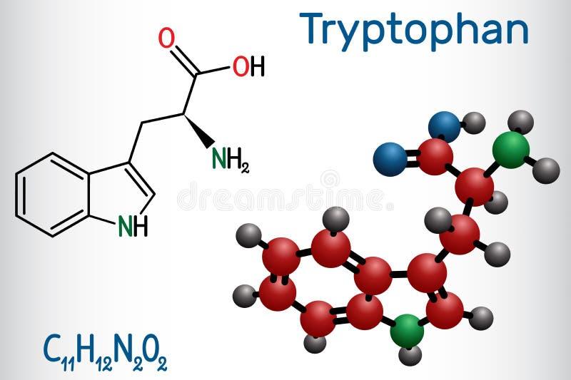 La molecola dell'aminoacido del triptofano, di Trp o di W, è utilizzata nella biosintesi delle proteine È necessario per la cresc illustrazione di stock