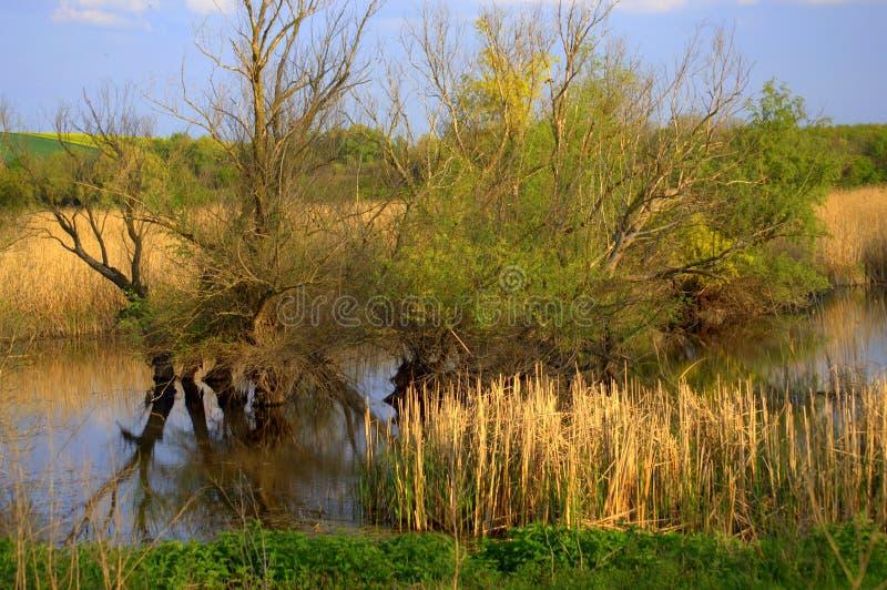 La molla in anticipo sistema il lago e gli alberi fotografia stock libera da diritti