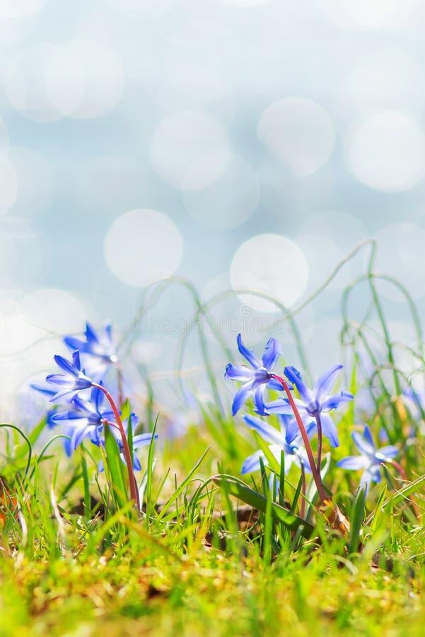 La molla blu fiorisce vicino all'acqua fotografia stock libera da diritti