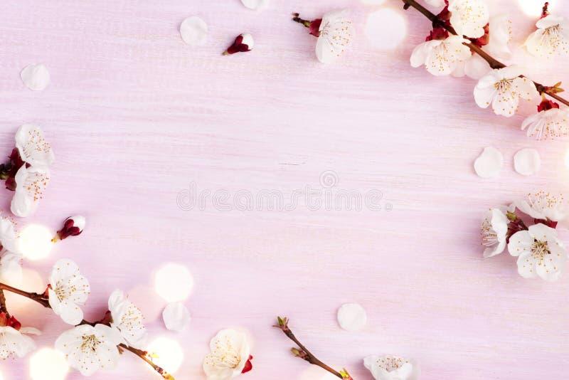 La molla di fioritura fiorisce su fondo di legno rosa con lo spazio della copia fotografie stock
