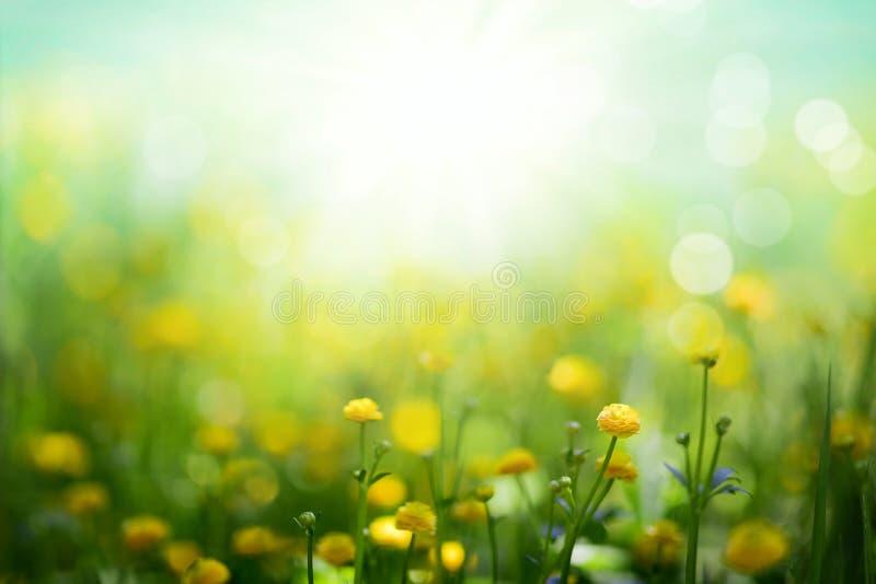 La molla gialla fiorisce il fondo immagini stock libere da diritti