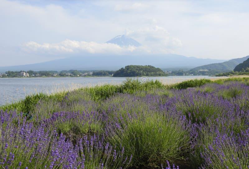La montaña y la lavanda de Fuji colocan en el lago Kawaguchiko, Japón foto de archivo libre de regalías