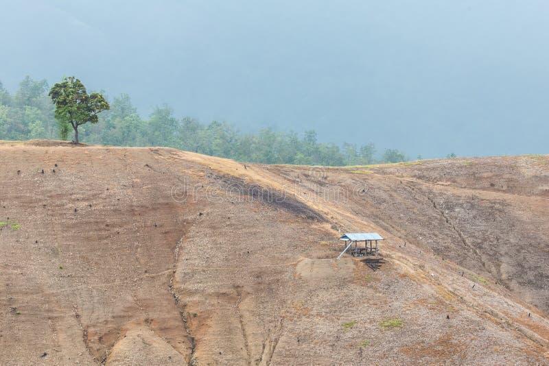 La montagna ha tagliato gli alberi, distrugge la foresta fotografia stock libera da diritti