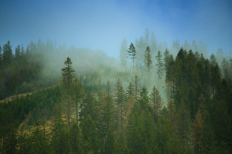 La montagna nebbiosa fotografie stock libere da diritti