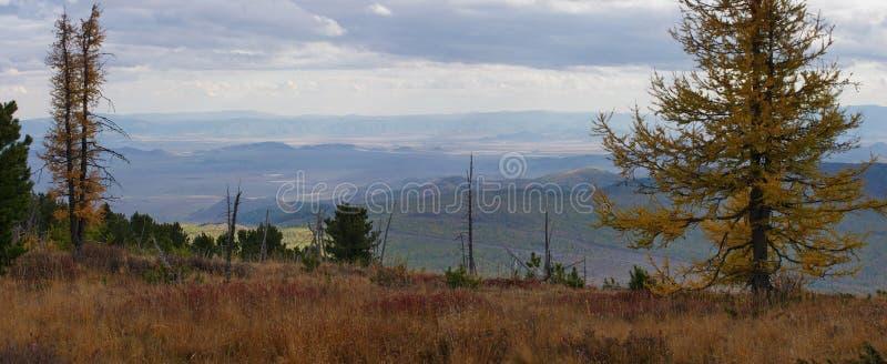 La montagna russa Alberi e montagna immagine stock libera da diritti