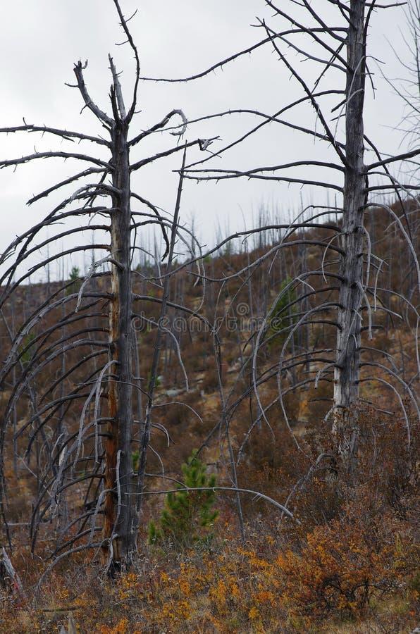 La montagna russa Alberi e montagna fotografia stock