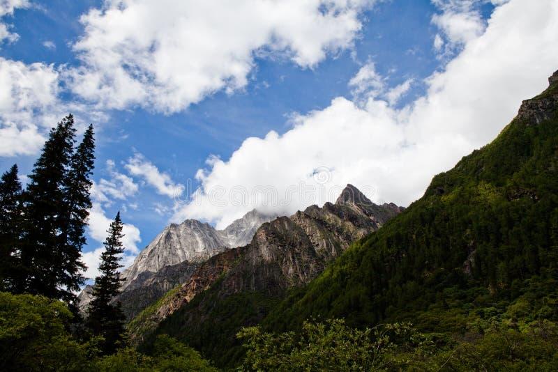 La montagne avec les arbres verts photos stock