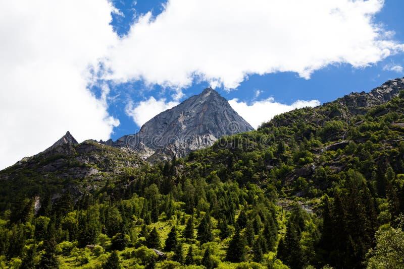 La montagne avec les arbres verts photo stock
