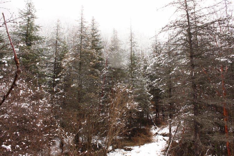 La montagne de neige photo stock