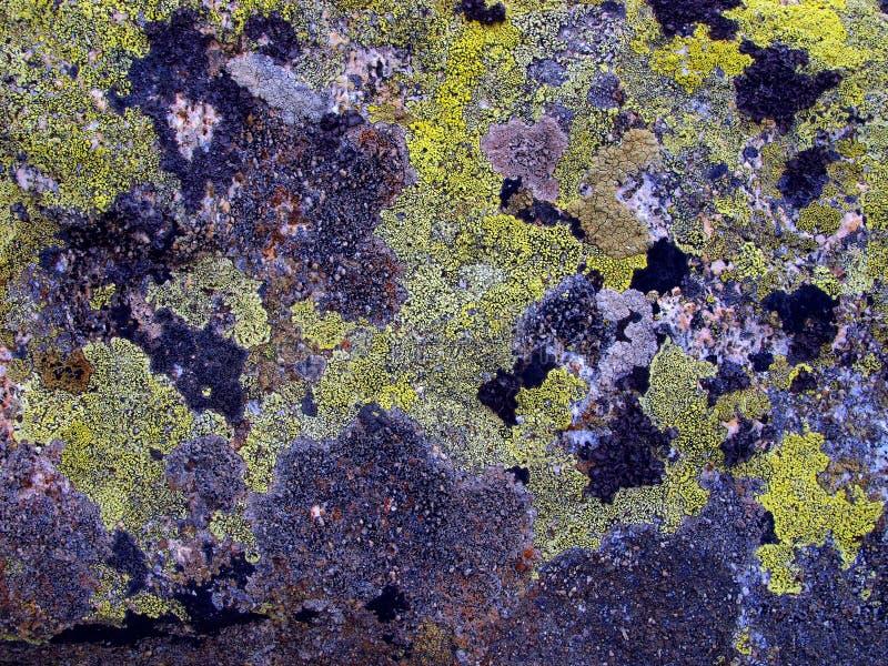 La montagne lapide envahi par de la mousse des dolomites de Brenta image libre de droits