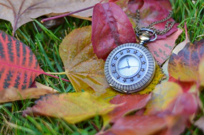 La montre de poche est sur des feuilles d'automne image stock
