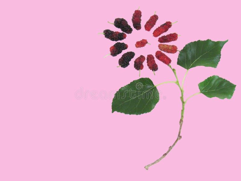 La mora fresca es ricos de una fruta en vitaminas, trae la fruta y el leav imagenes de archivo