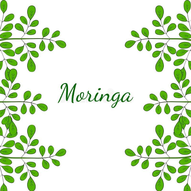 La moringa oleifera, confina 2 a colori royalty illustrazione gratis