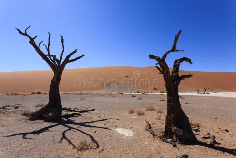 La mort Vlei caché par arbre photos libres de droits