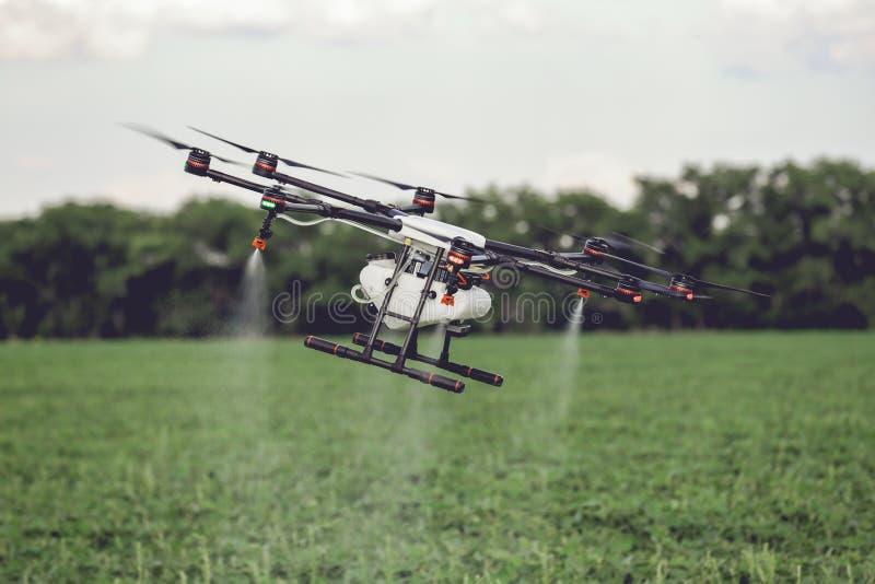 La mosca del abejón de la agricultura al fertilizante rociado en el arroz coloca imagen de archivo