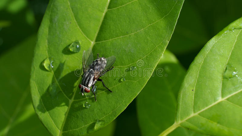 La mosca en las natillas foto de archivo