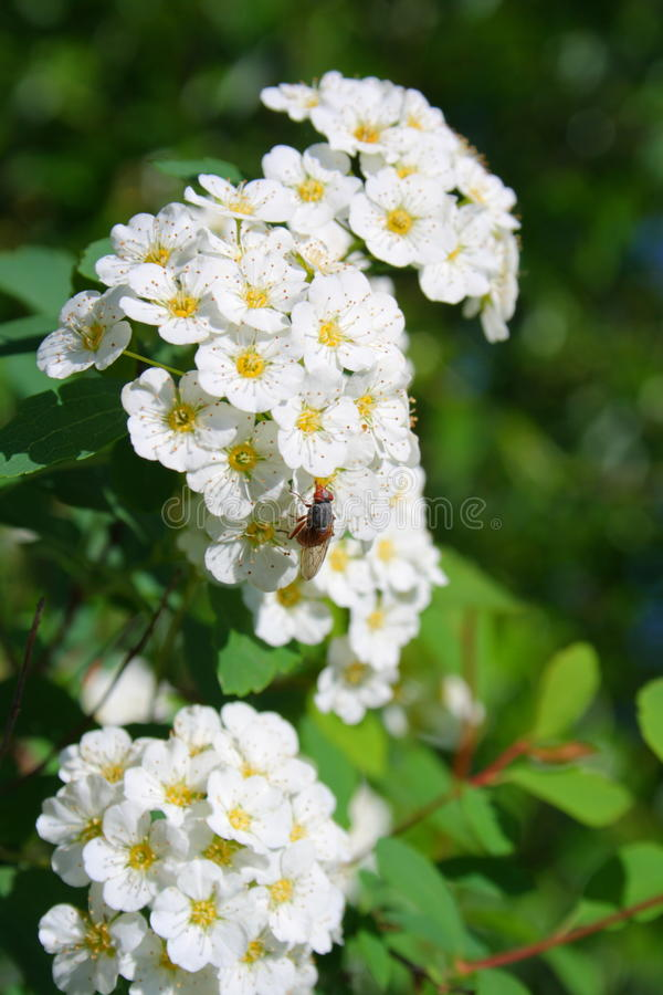 La mosca sul fiore fotografia stock libera da diritti