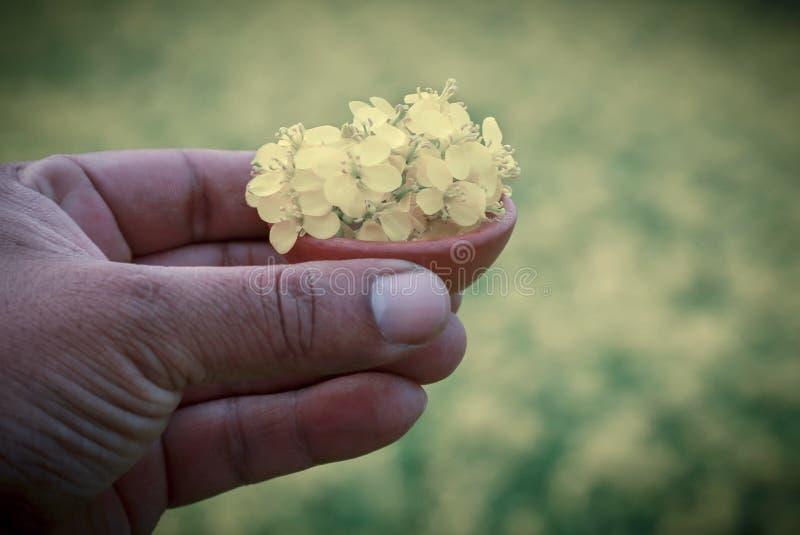 La mostaza florece al aire libre fotografía de archivo libre de regalías