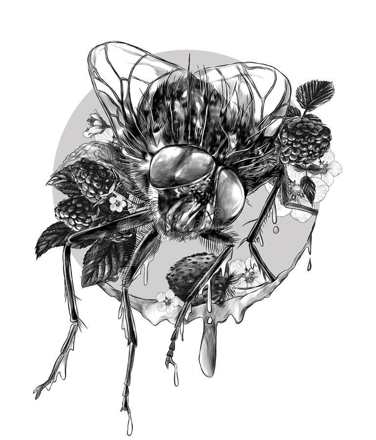 La mouche se repose entouré par des framboisiers et des fleurs et autour de beaucoup de baies mûres, tout couvertes de confiture  illustration libre de droits