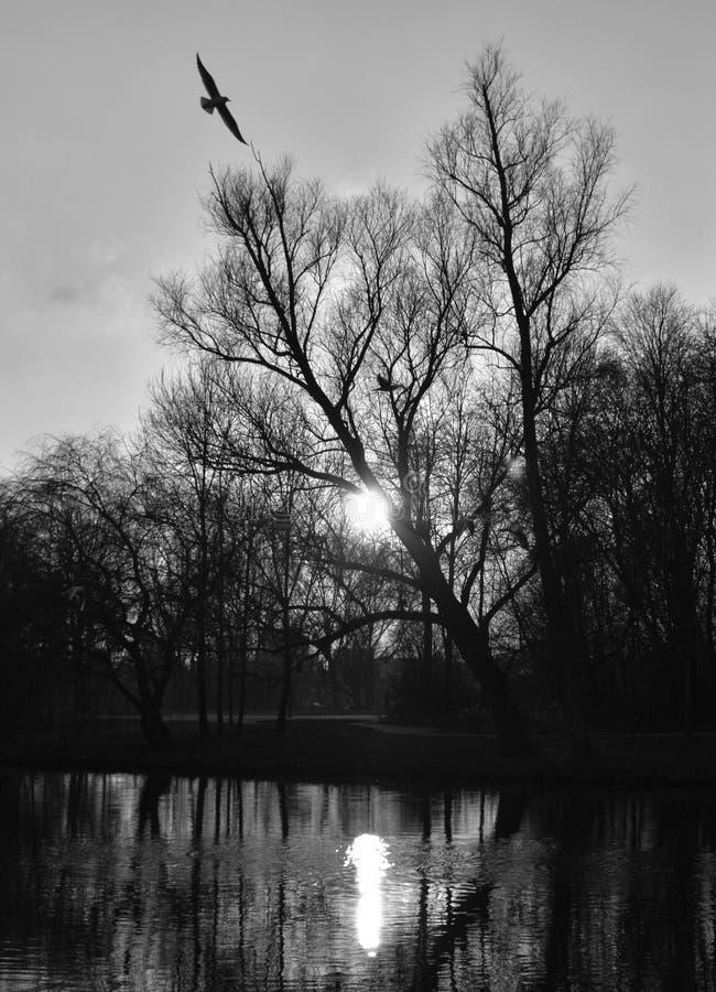 La mouette alignée avec un arbre nu, le soleil est briller vrai et fait une réflexion gentille sur l'eau image stock