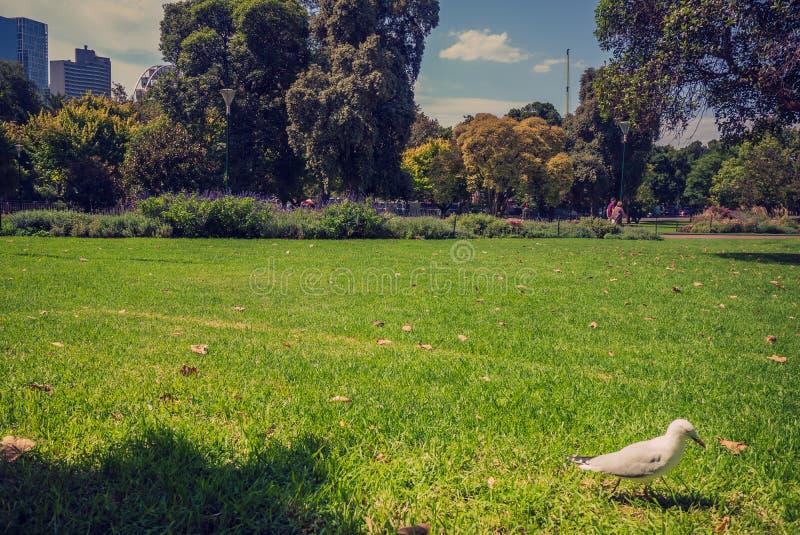 La mouette marche sur l'herbe à la Reine Victoria Gardens image libre de droits