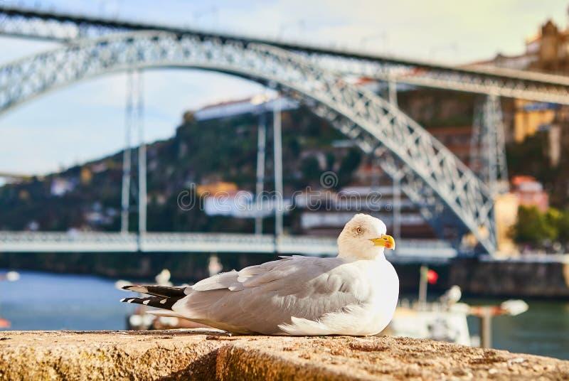 La mouette se repose sur le remblai de la rivi?re Douro ? vieille Porto avec le fond du pont de Dom Luis, Portugal photo stock