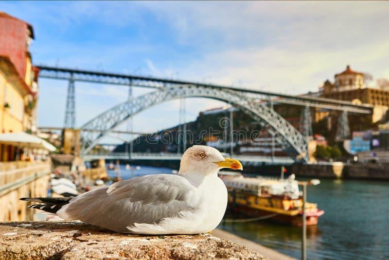 La mouette se repose sur le remblai de la rivi?re Douro ? vieille Porto avec le fond du pont de Dom Luis, Portugal photo libre de droits