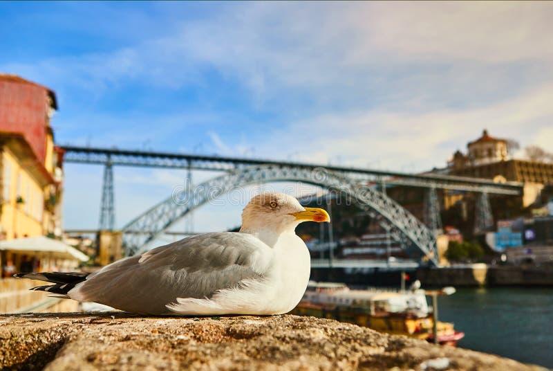 La mouette se repose sur le remblai de la rivi?re Douro ? vieille Porto avec le fond du pont de Dom Luis, Portugal photos stock