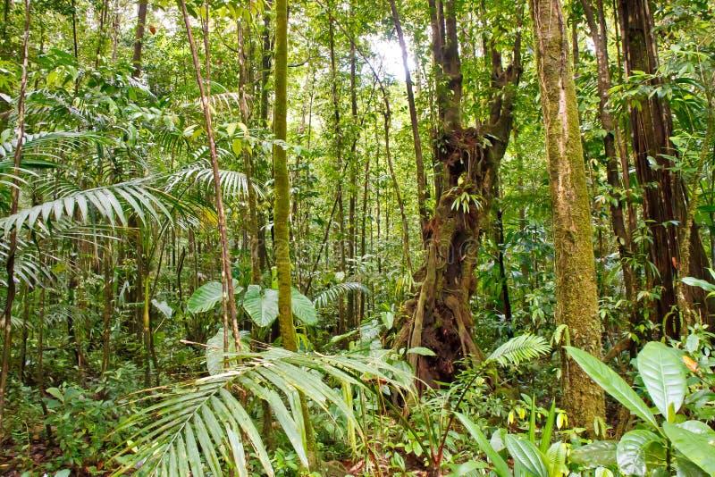 La mousse a couvert des arbres dans la forêt tropicale photographie stock