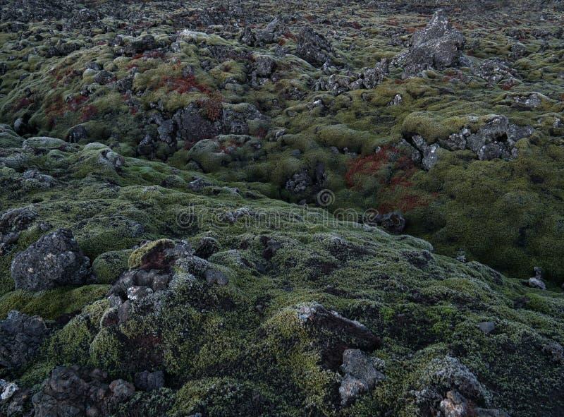 La mousse a couvert des roches de lave près de Grindavik en Islande photos stock