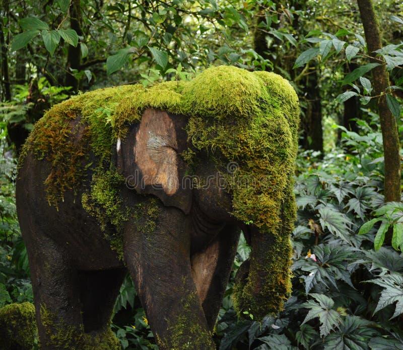 La mousse a couvert l'éléphant photos libres de droits