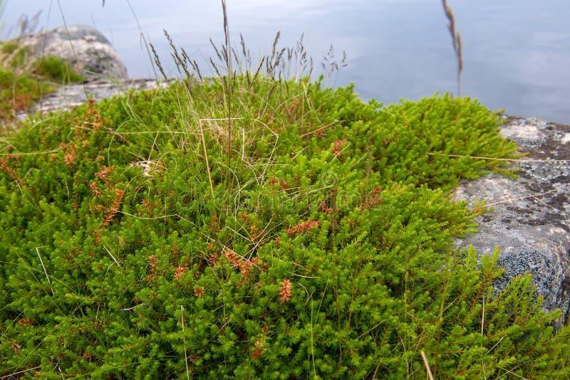 La mousse couvre le rivage rocheux photo libre de droits