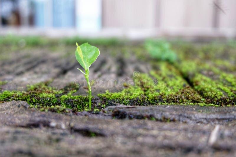 La mousse et l'herbe se développent sur le béton photo libre de droits