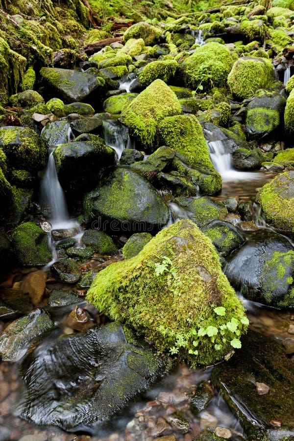 La mousse luxuriante a couvert des roches et un courant images libres de droits