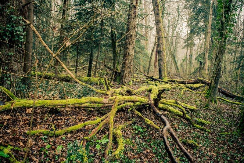 La mousse se développe sur le bois dans les Frances photo stock