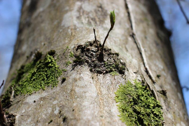 La mousse sur l'arbre image libre de droits
