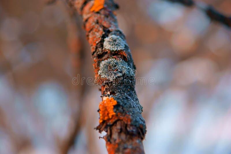La mousse sur les branches photographie stock