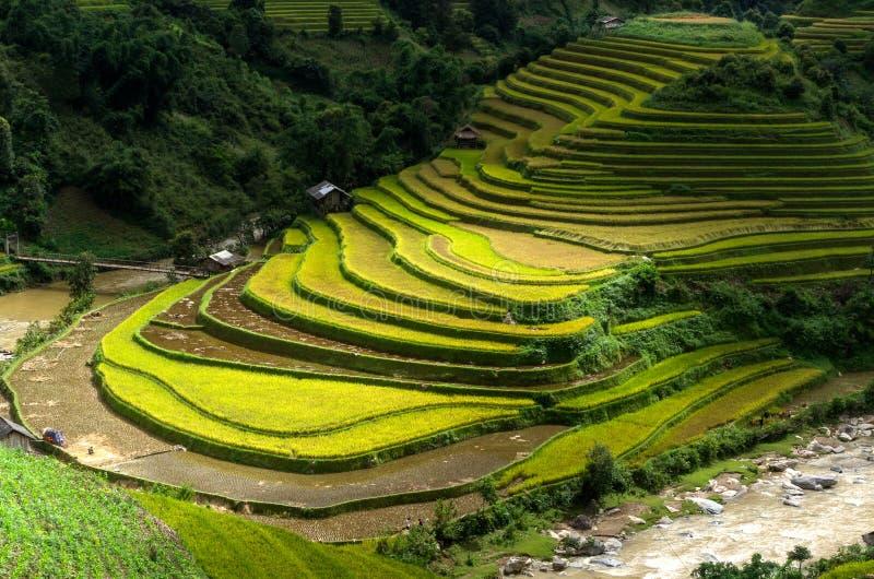 La MU Cang Chai fotografia stock libera da diritti