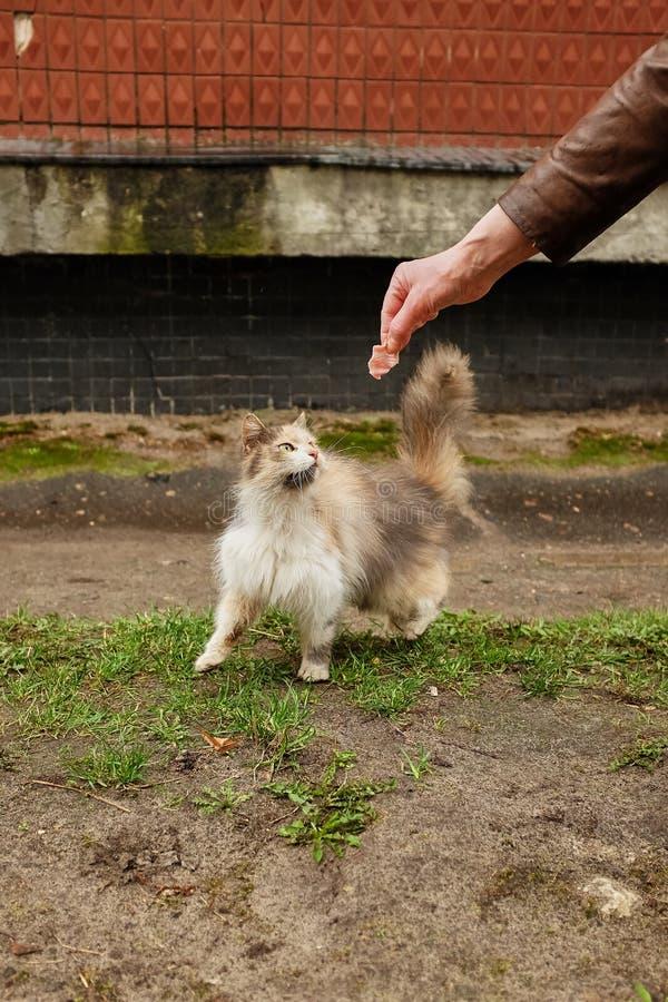 La muchacha alimenta un gato perdido en la calle foto de archivo libre de regalías