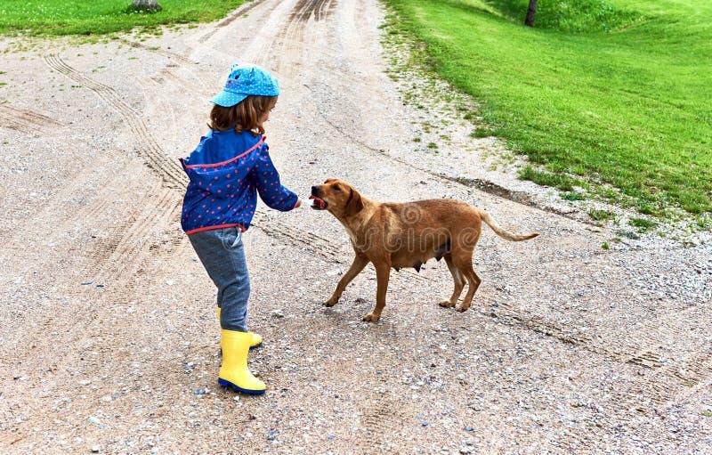 La muchacha alimenta un perro sin hogar fotografía de archivo