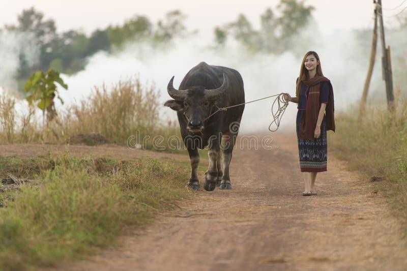 La muchacha asiática en el campo, caminando detrás se dirige con su búfalo imagenes de archivo