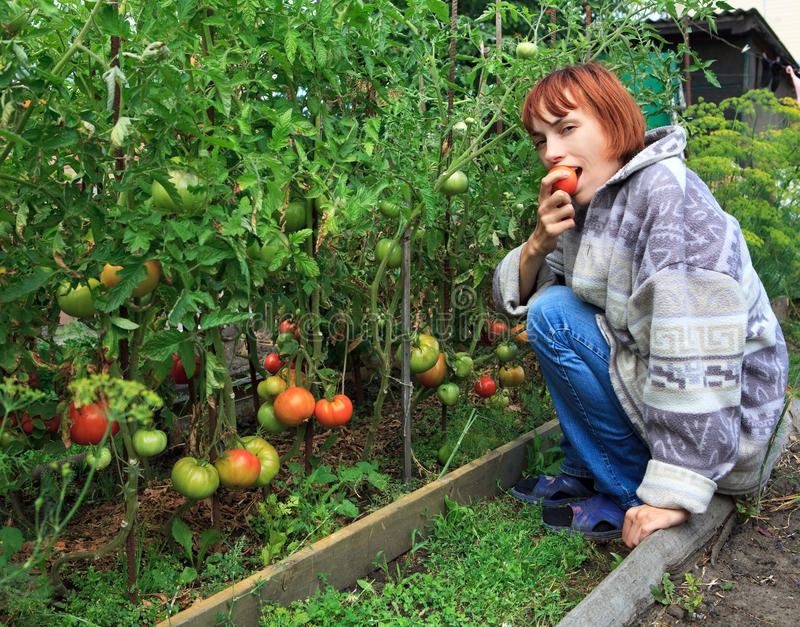 La muchacha come el tomate maduro. fotografía de archivo libre de regalías
